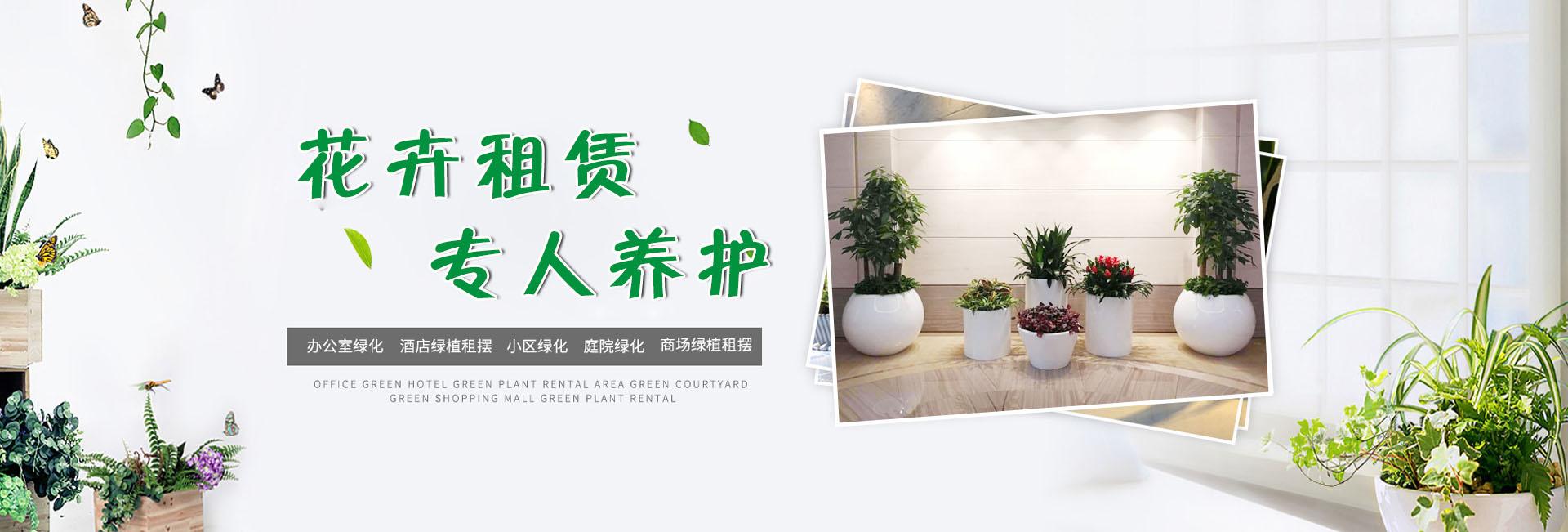 济南花卉租赁