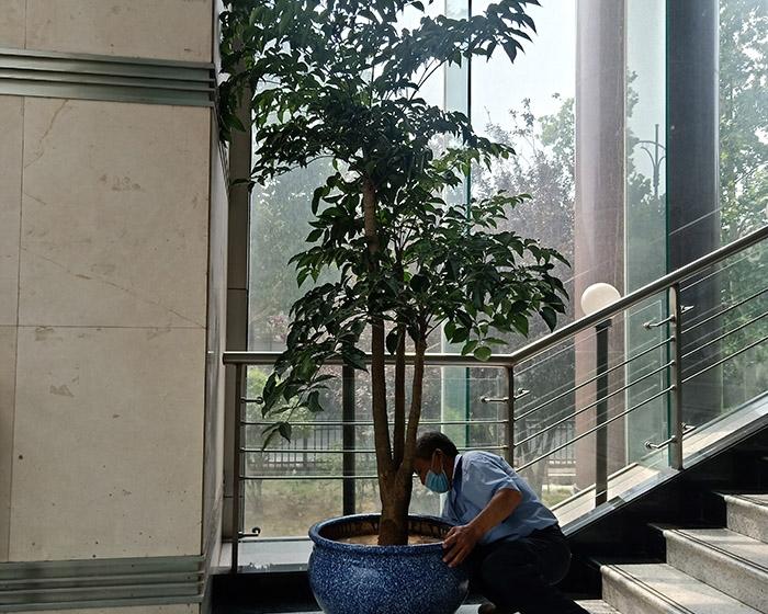 楼梯间绿植租赁