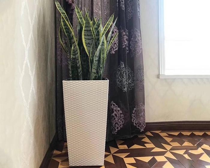 酒店花卉租赁